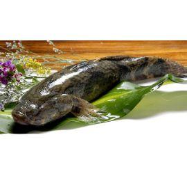 Live soon hock fish